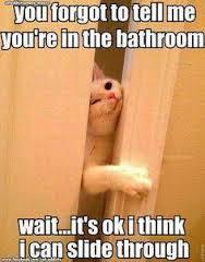 cat in dooe