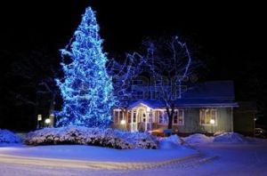 I think the homeowners had to fight very hard on Black Friday to get this beautiful Christmas tree in blue lights, on sale at Home Depot.