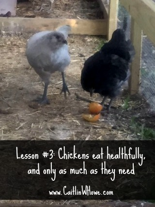 Healthy Living Lesson Backyard Chickens 3