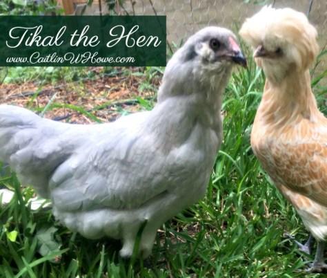 ChickenNames_Tikal