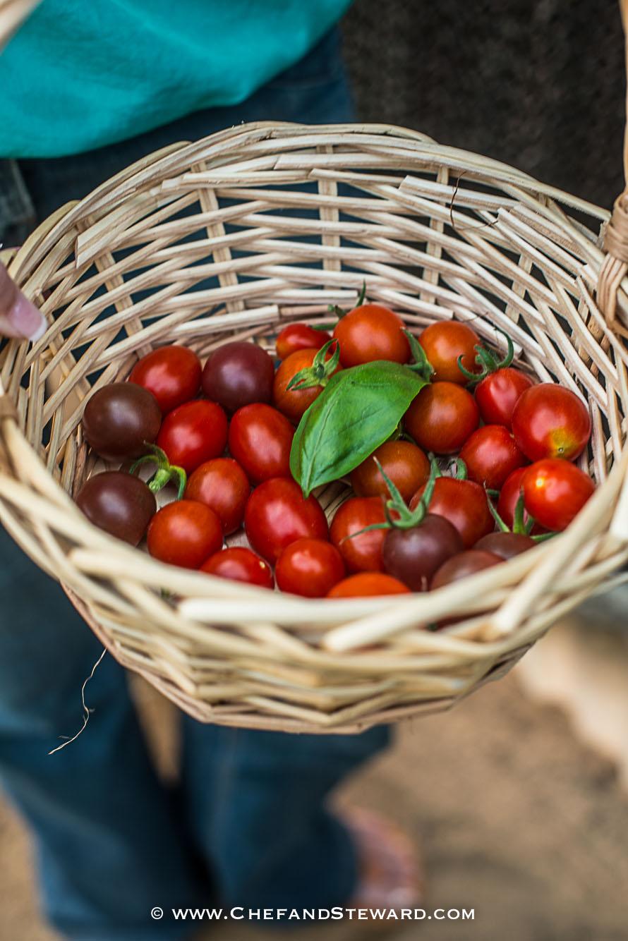 greenheart-organic-farms-dubai-uae-farm-tour-10.jpg