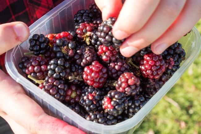Punnet of Blackberries
