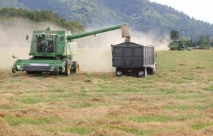 Oregon Grass Seed Harvesting