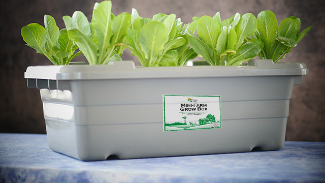 Mini Hydroponic Grow Box