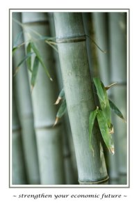 Website Repairs, Marketing, Management Services strong yet flexible as bamboo.