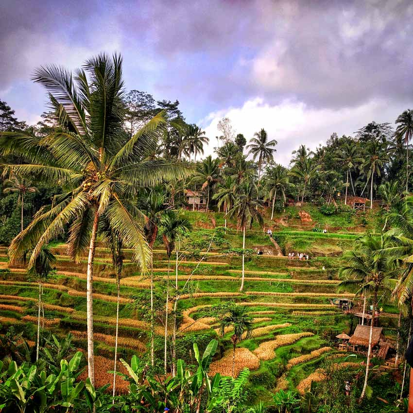 Things to do in Bali Things to do in Bali tegalalang rice terraces bali indonesia laid back traveller laidbacktraveller.com