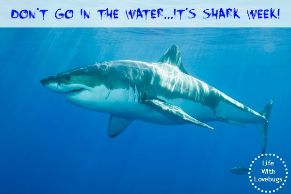 Don't go in the water   It's Shark Week! - Life With Lovebugs