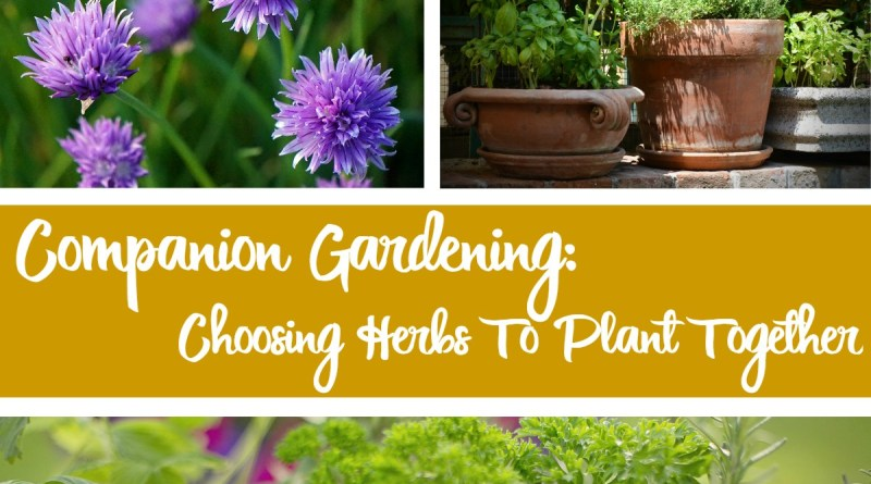 Companion Gardening: Choosing Herbs To Plant Together