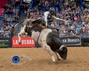 Tanner Byrne with the winning ride in the PBR Saint Louis Invitational. Photo by Sean Derrick/Thyrd Eye Photography.