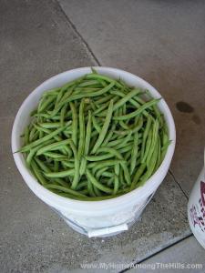 a 5-gal bucket o' beans