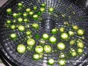 Drying jalapenos