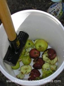 Smashing apples for cider