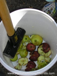 Smashing apples for cider