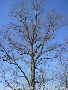 This tree just rocks!