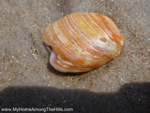 Shell with a heart shaped mark