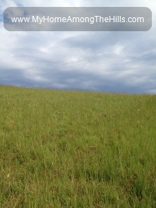 Our hay field