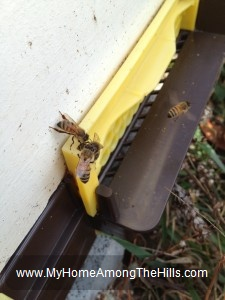 Bees hanging out in winter