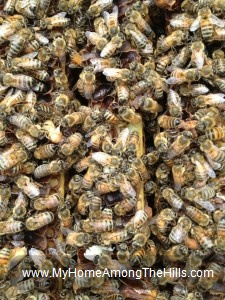 Requeening a beehive