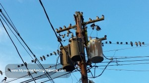Ugly utility pole