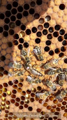 A queen bee