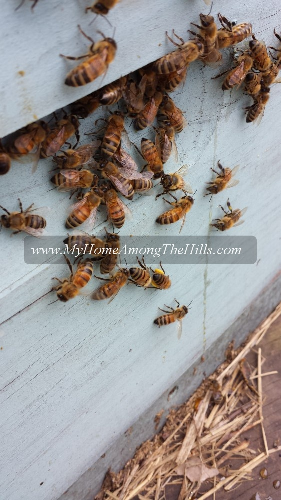 Bees hanging on a beehive