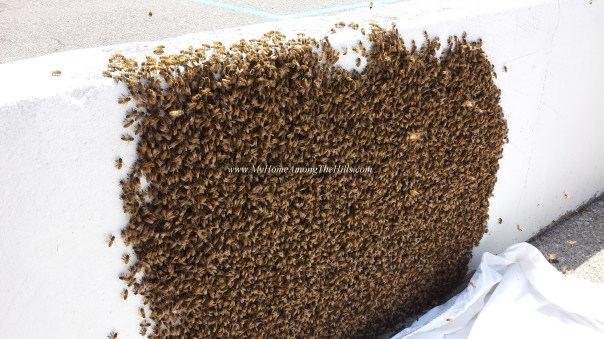 Large swarm on a concrete wall