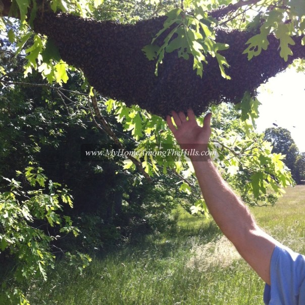 My hand in a huge swarm of bees!