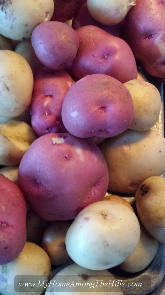 Some of this year's potatoes