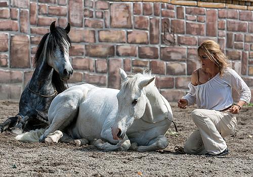 Pferdefluesterin