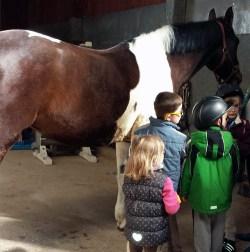 NZ Kinder mit dem Schulpferd Lambada