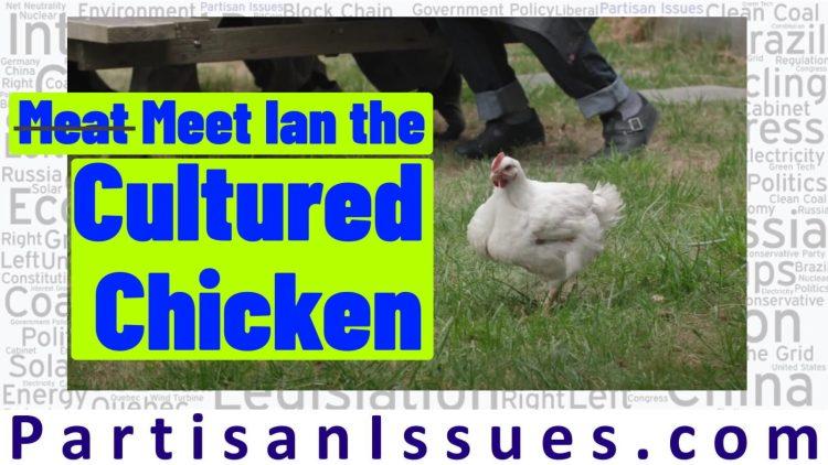 Meat Meet Ian the Cultured Chicken