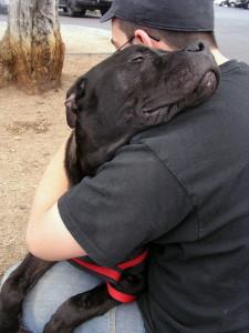 Pibble hugs