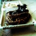 small pvc dog cot