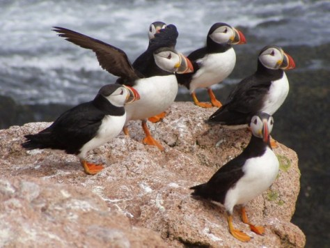 Galapagos - seeing Puffins is on my Travel bucket list