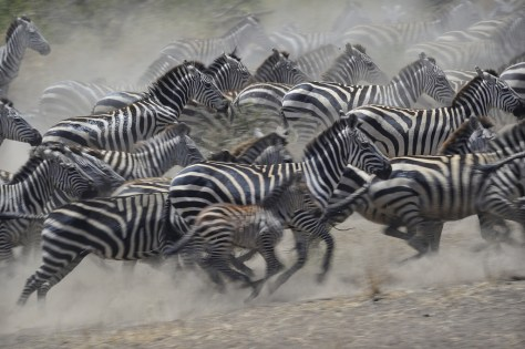 seeing the Serengetti Migration is on my travel bucket list