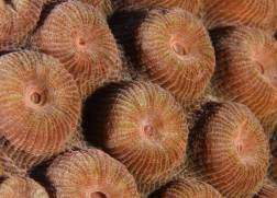 Coral up close