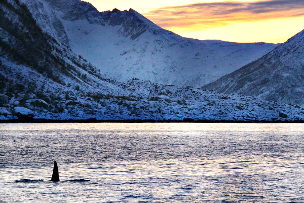 Tromso whale watching