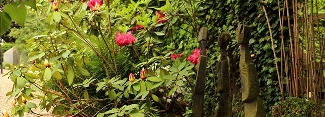 Le jardin d'ombre - Rhododendrons et sculptures