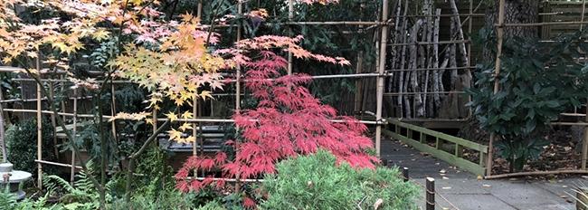 L'entrée vers le jardin de thé aux couleurs d'automne