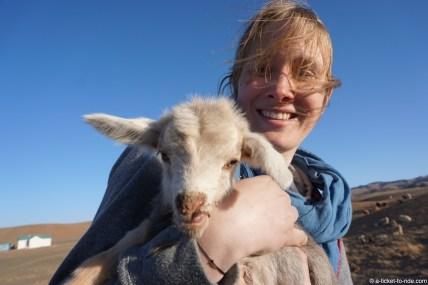 Mongolie, petite chèvre