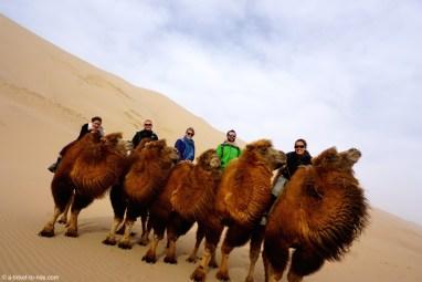 Mongolie, dunes de Khongoryn Els, à chameaux