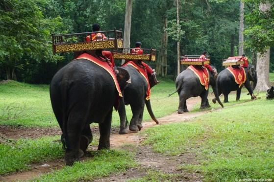 Cambodge, Angkor, éléphants