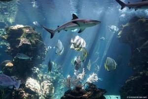 Nouvelle-Calédonie, Nouméa, aquarium