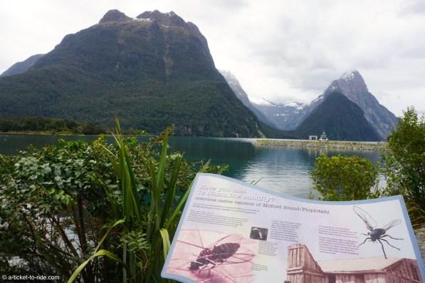 Nouvelle-Zélande, Milford Sound, attention sandfly