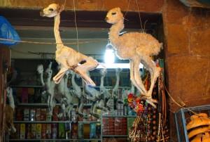 Bolivie, La Paz, foetus de lama