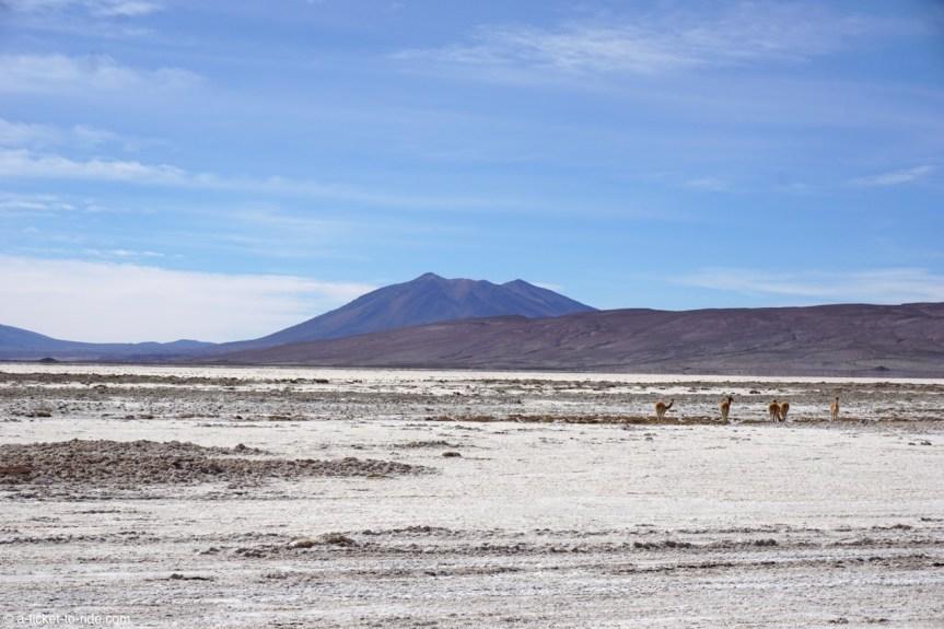 Bolivie, Sud Lipez