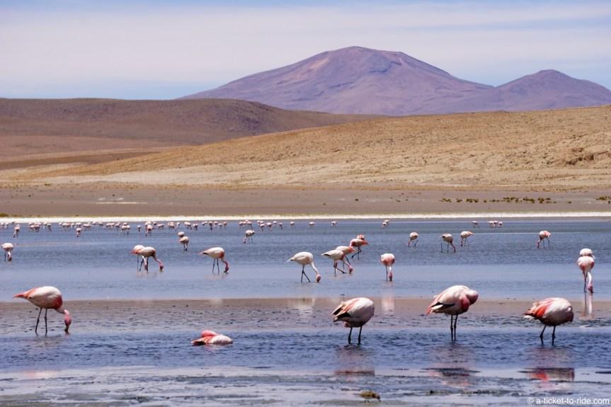 Bolivie, Sud Lipez, lac Hedionda