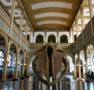 Chili, Santiago, musée de l'Histoire naturelle