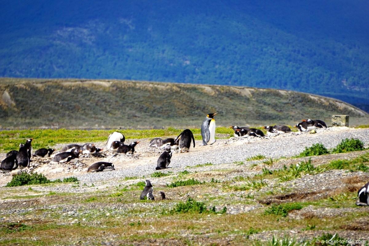 Visiter Ushuaïa, est-ce que ça vaut le coup ?