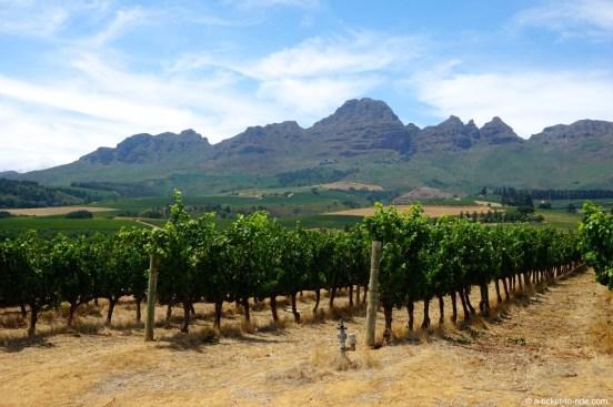 Afrique du Sud, Cape Town, Stellenbosch